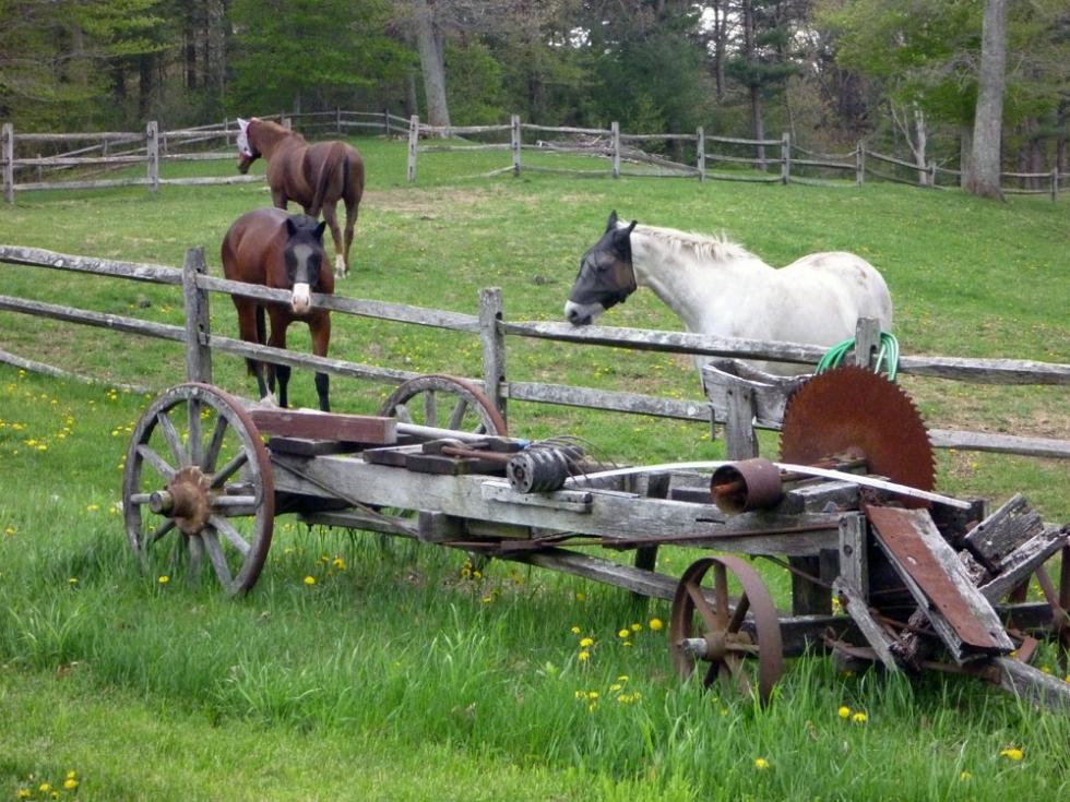 Hamilton Horses
